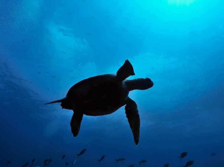 Learn about the conservation of precious species in the Galapagos Islands