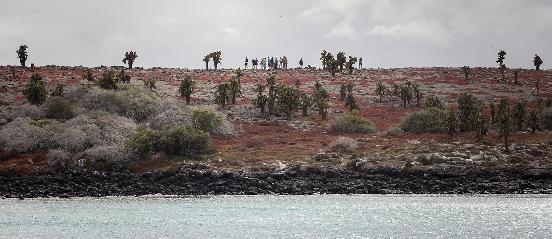 Galapagos hiking tours: walking on South Plaza